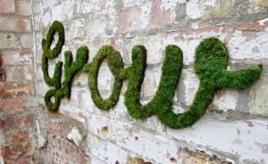 Graffiti végétal guerilla jardiniere